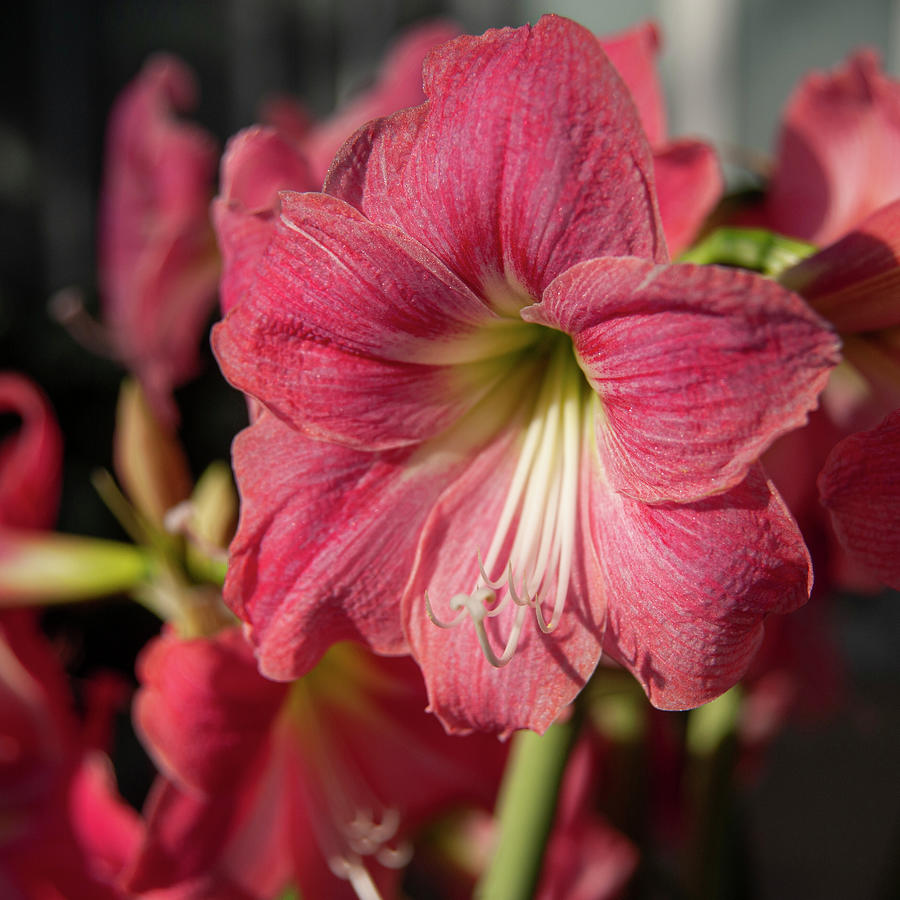 Fleur by Miguel Winterpacht
