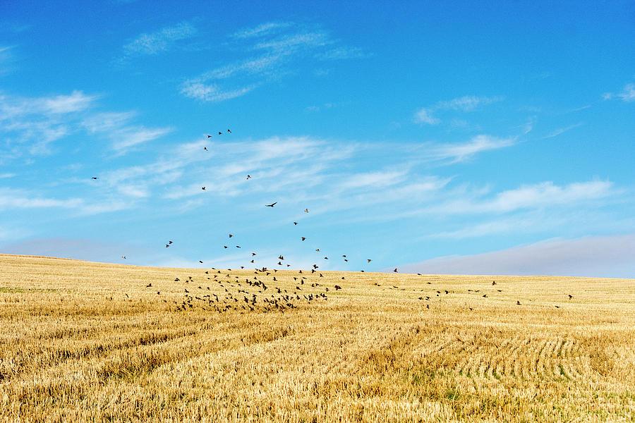 Landscape Photograph - Flock Of Birds by Laura J P Richardson