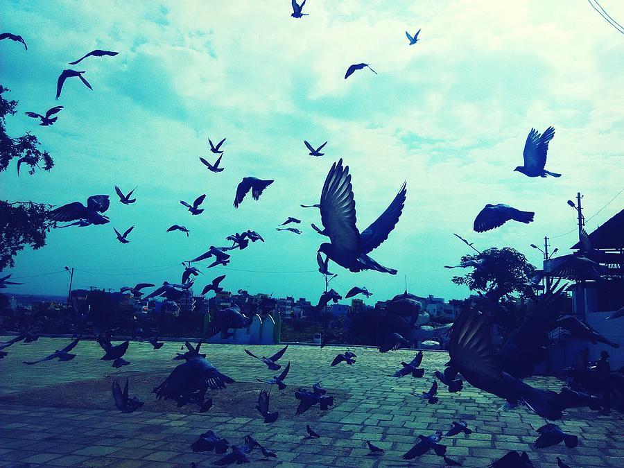 Flock Of Pigeons Against Sky Photograph by Azhar Naveed / EyeEm