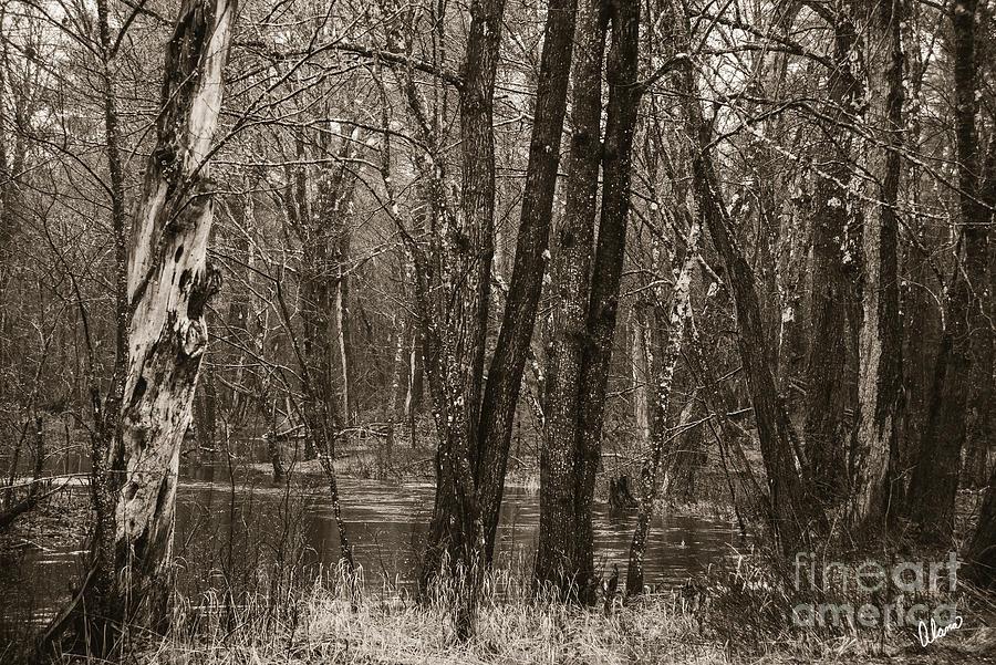 Flooding Photograph