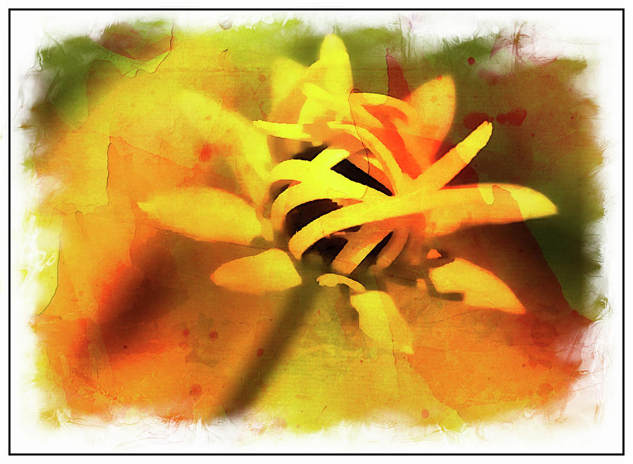 Flower Photograph - Floral # 10 by Sandra Marie Photography