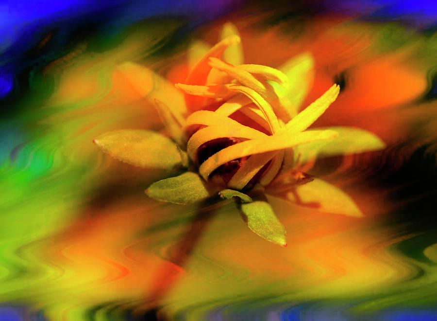 Flower Photograph - Floral #9 by Sandra Marie Photography