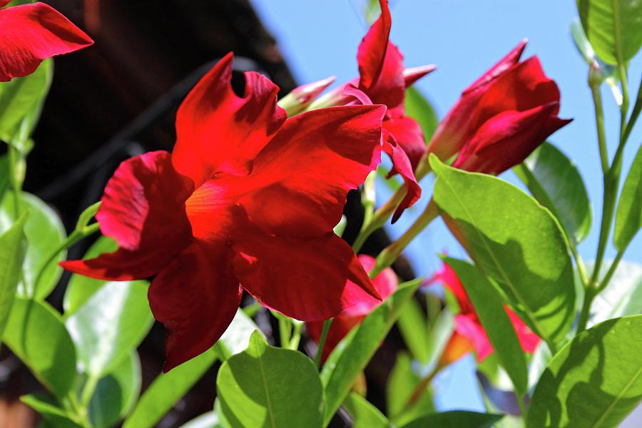 Floral Dreams Photograph