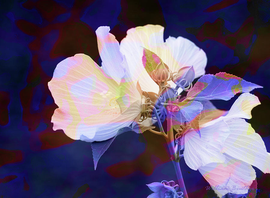 Floral Fantasy 2 by William Beuther