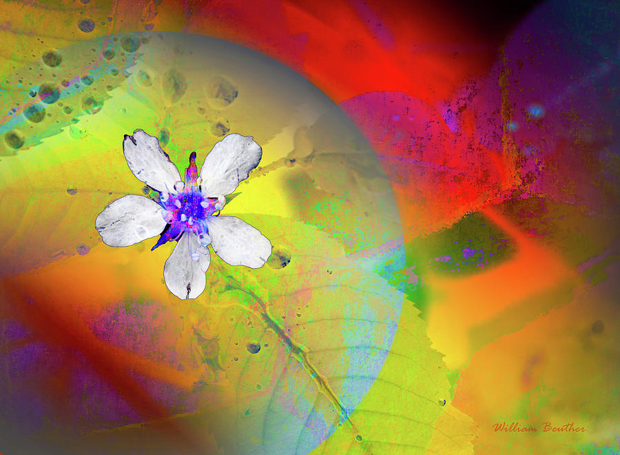 Floral Fantasy 4 by William Beuther