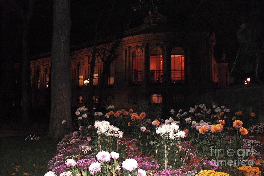Floral Series 1, Paris Night circa 2012 by Felipe Adan Lerma
