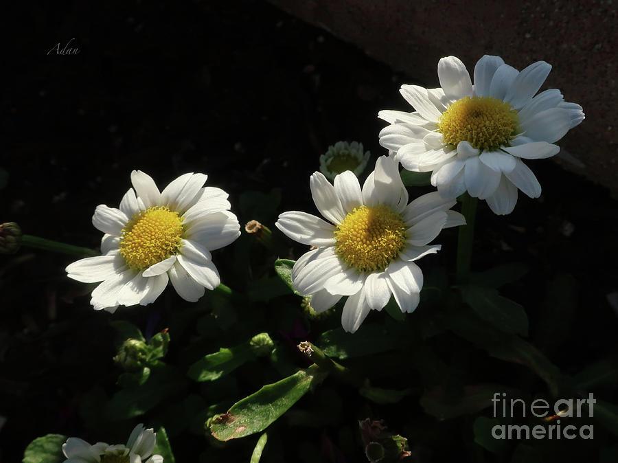 Floral Series 2, Floating Blooms circa 2019 by Felipe Adan Lerma