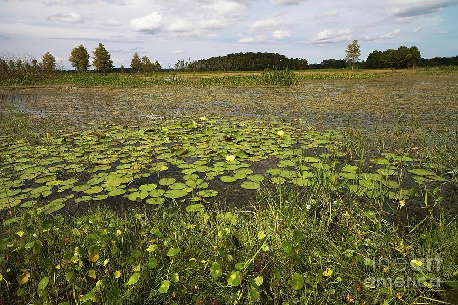 Florida Wetlands Photograph - Florida Wetlands 6 by Felix Lai