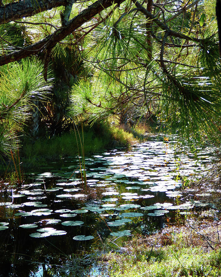 Florida Wilderness 300 by Sharon Williams Eng
