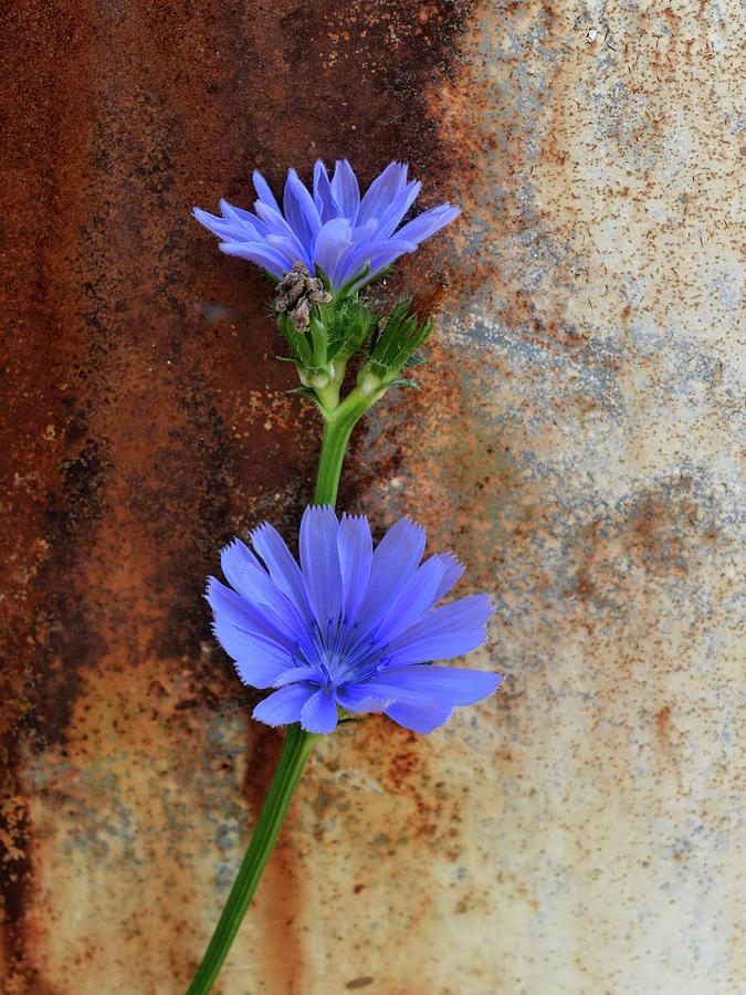 Florescence Photograph