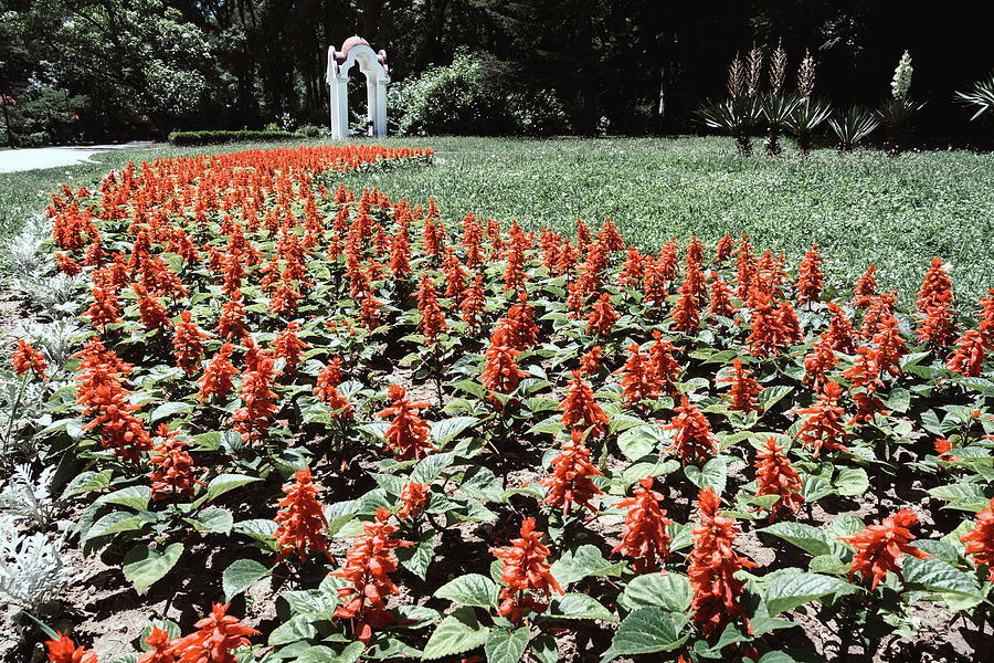 Flower Bed In A Park Photograph