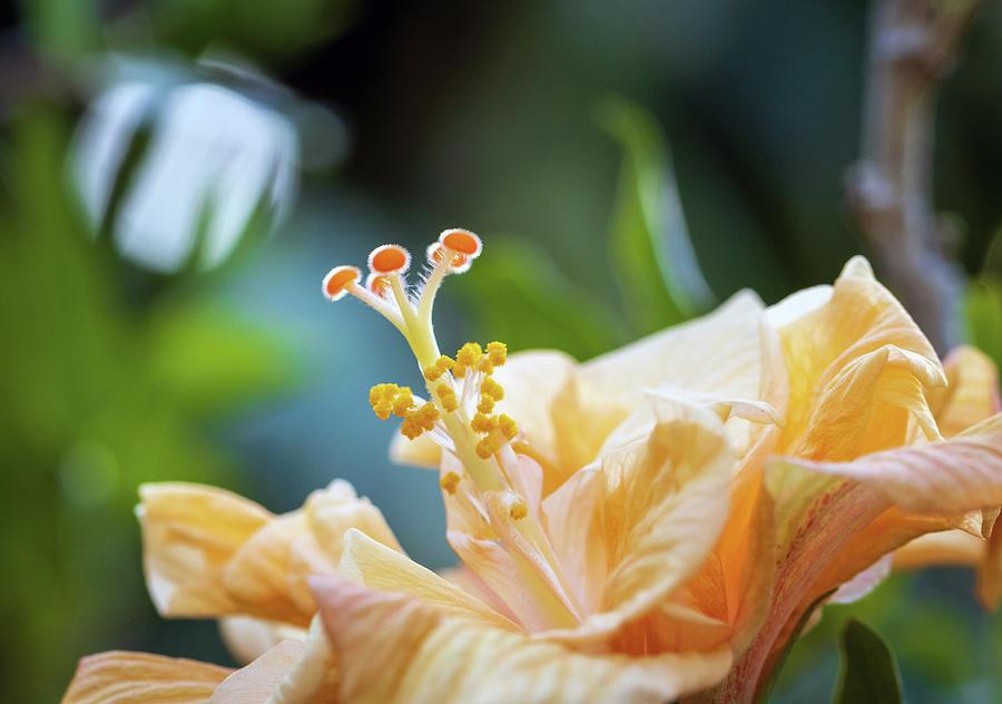 Macro Photograph - Flower Macro Photo by R Scott Duncan