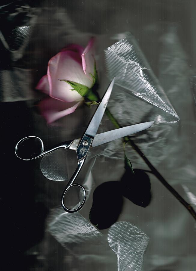 Flower Shop Digital Art