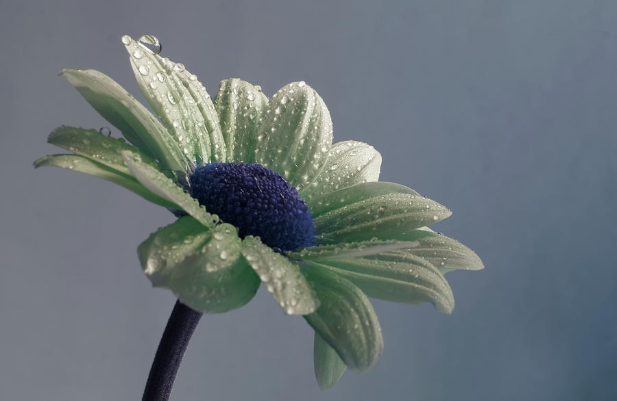 Flower With Raindrops Photograph