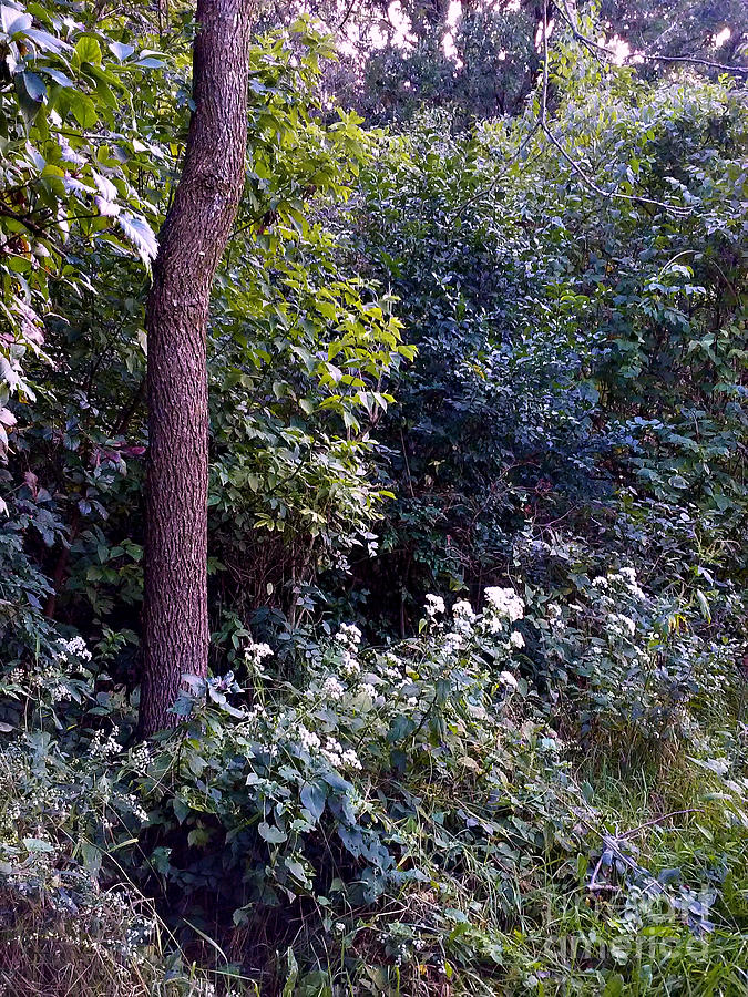 Nature Photograph - Flowers Along The Trail by Frank J Casella