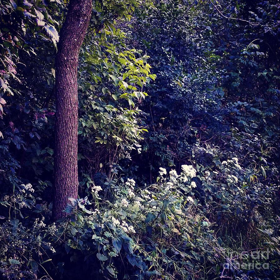 Conium Maculatum Photograph - Flowers Along The Trail - Heat Effect by Frank J Casella