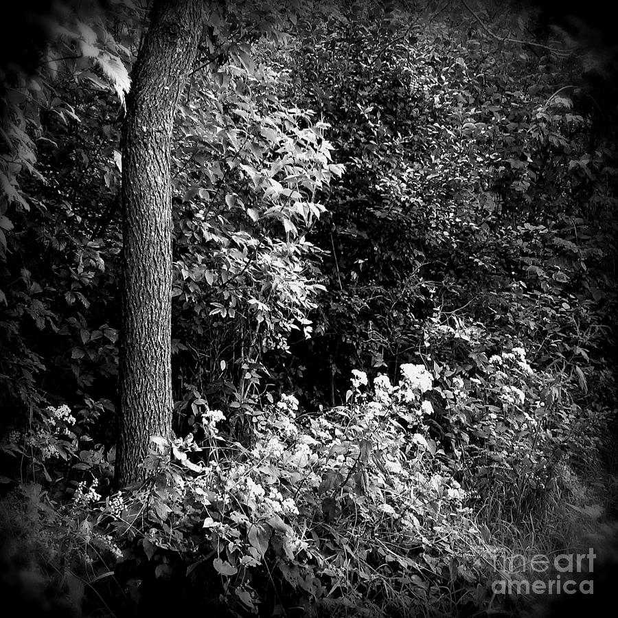 Flowers Along The Trail - Holga Effect Photograph