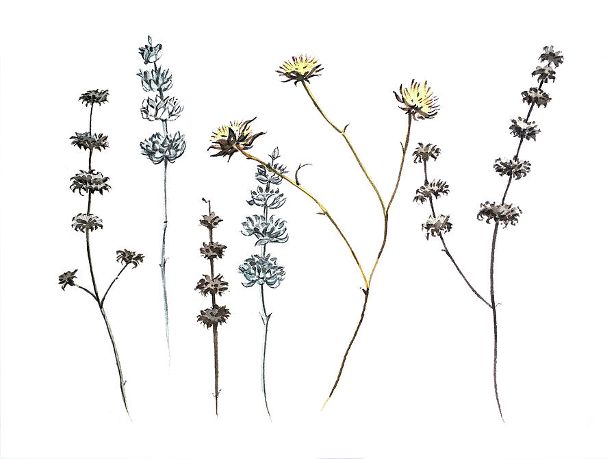 Flowers And Seed Heads Painting