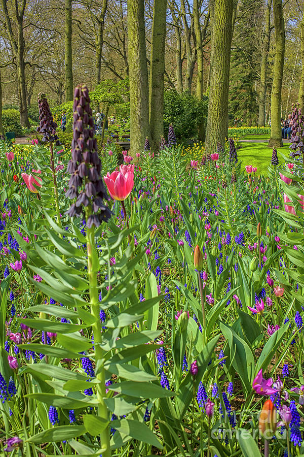 Flowers In All Colors At The Keukenhof Photograph