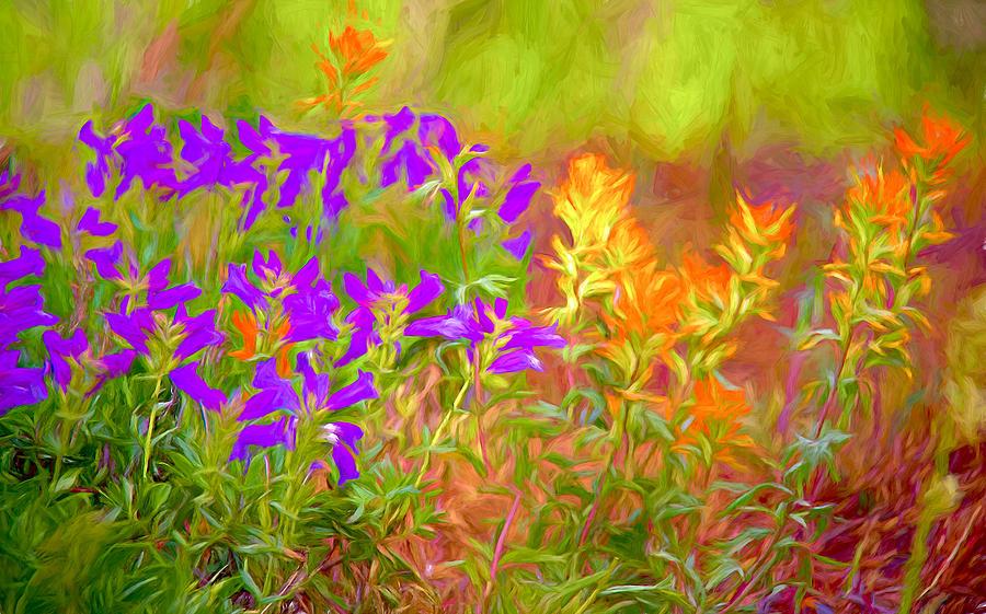 Flowers Of Summer Photograph