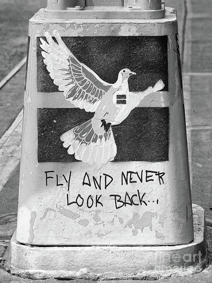 Fly Photograph - Fly and Never Look Back by Frank Daske