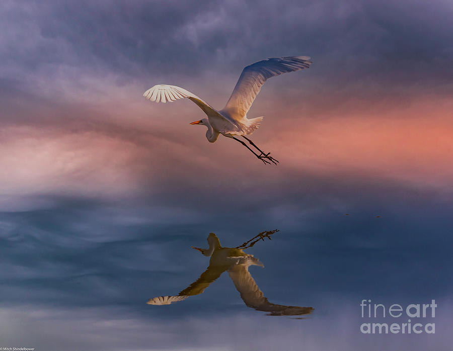Fly Away Photograph