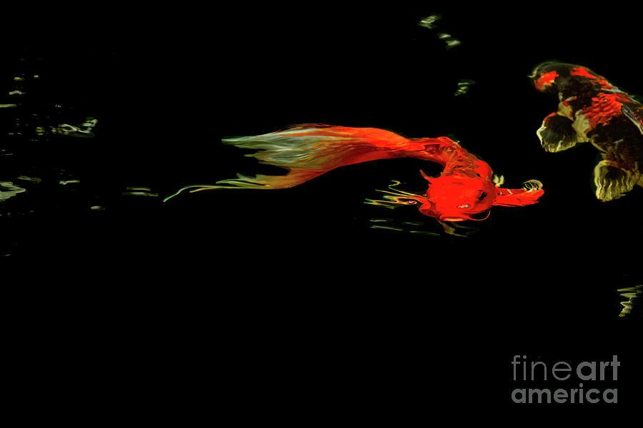 Flying Beneath  by Marilyn Cornwell