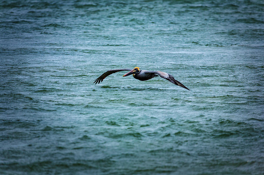 Flying Low on the Outer Banks by Dan Carmichael