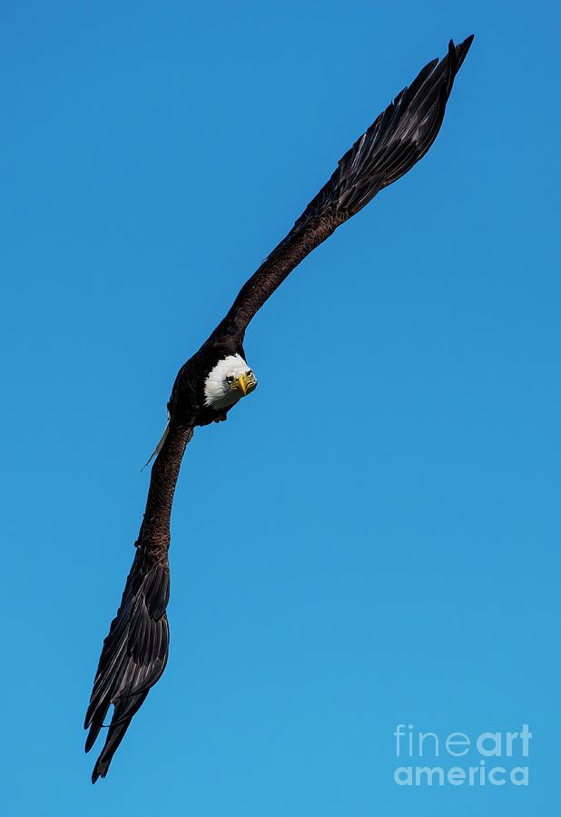 Flying On Edge Photograph