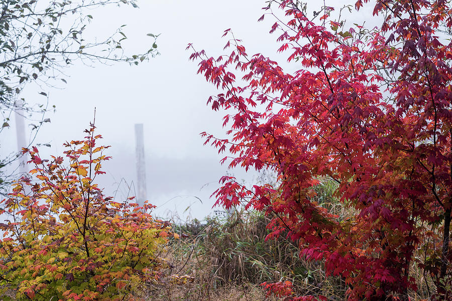 Fog and Autumn by Robert Potts
