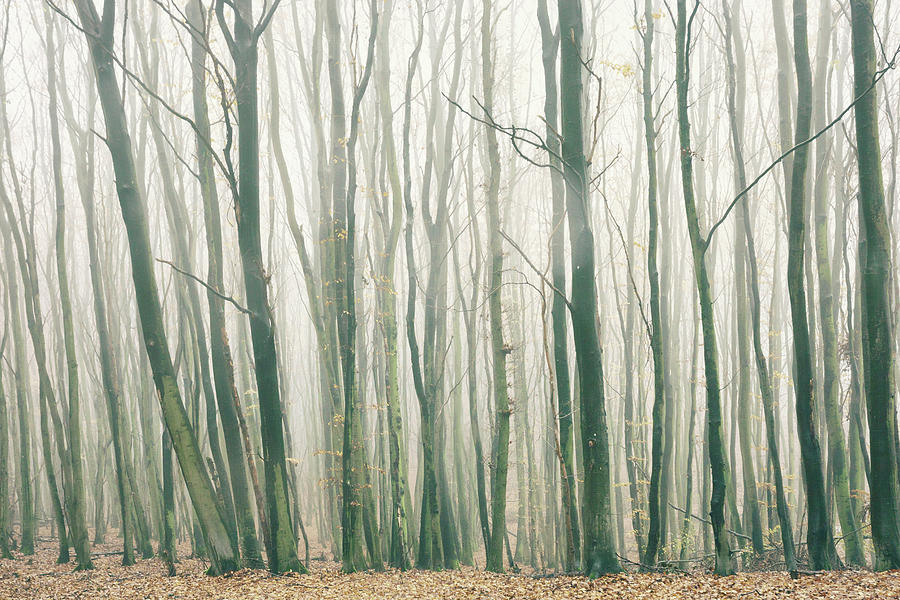 Fog In The Forest Photograph