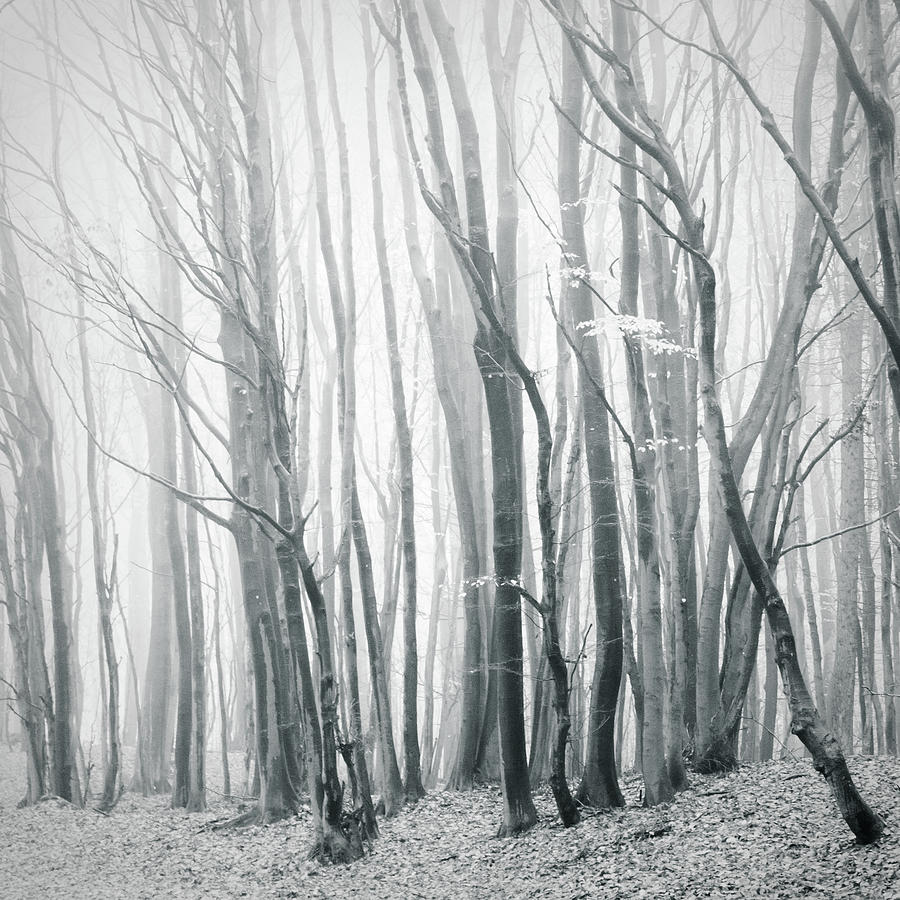 Fog In The Forest II Photograph