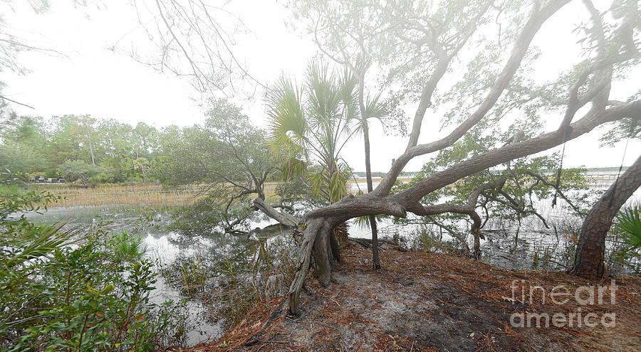 Fog - Live Oak Tree - Rivertowne On The Wando Photograph