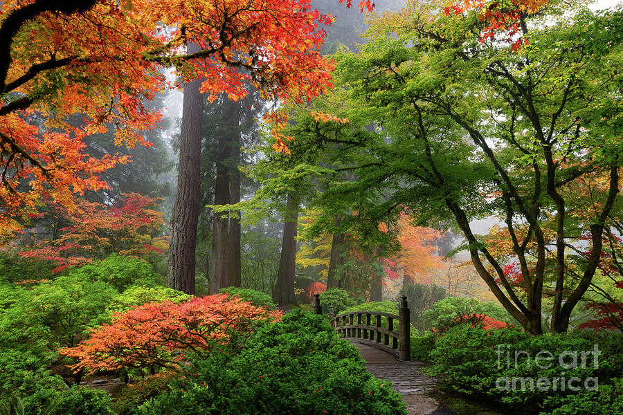 Foggy Autumn Morning Overlooking Moon Bridge In Portland Japanese Garden Photograph By Tom Schwabel