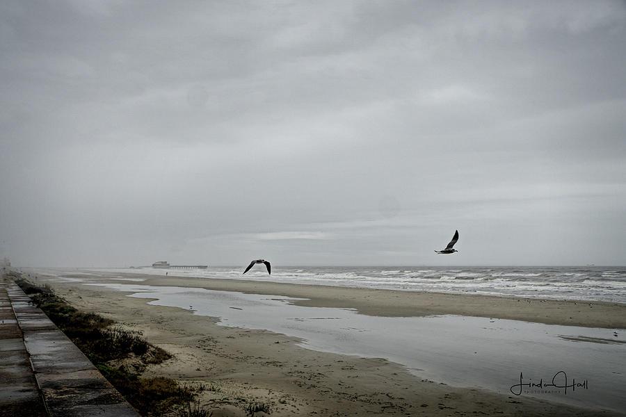 Gulf Shore Photograph - Foggy Beach by Linda Lee Hall