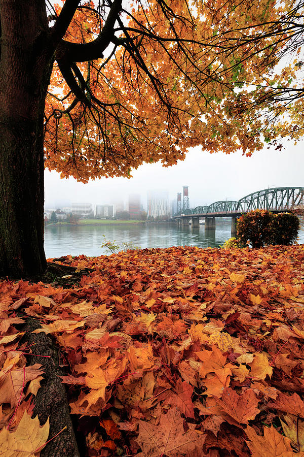Foggy Fall Day In Portland Photograph