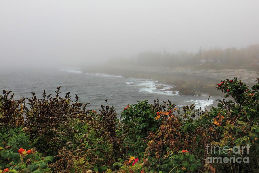Maine Photograph - Foggy Maine Coast by Felix Lai