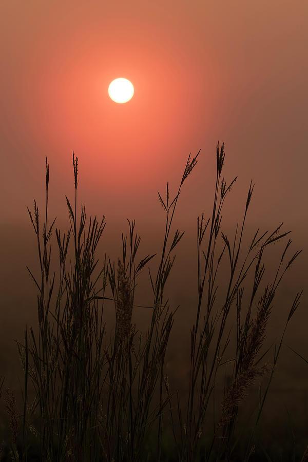 Foggy Morning Bluestem by Scott Bean