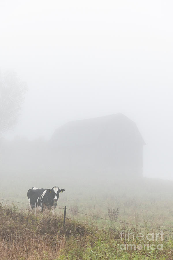 Foggy Morning at the Farm by Amfmgirl Photography