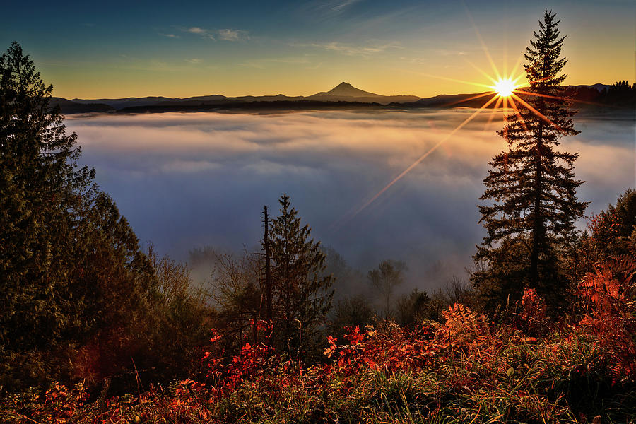 Foggy Oregon Sunrise Photograph