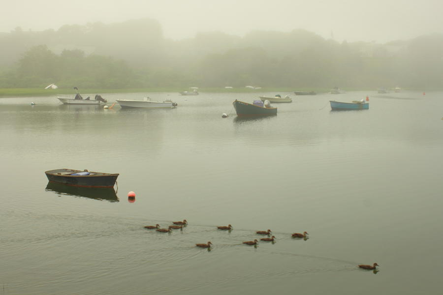 Foggy Tidal River In Chatham Photograph