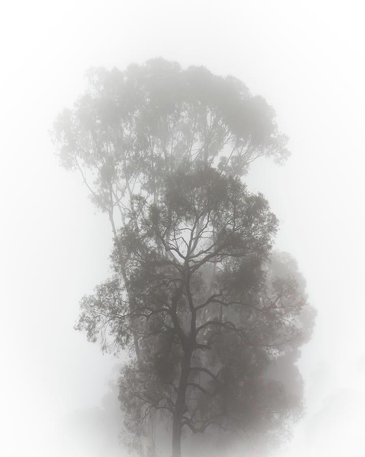 Foggy Tree by Alison Frank