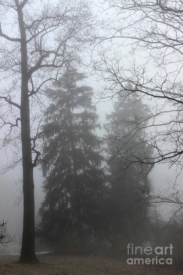 Foggy Twins by Karen Adams