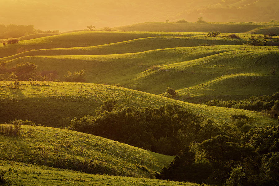 Folds of Green by Scott Bean