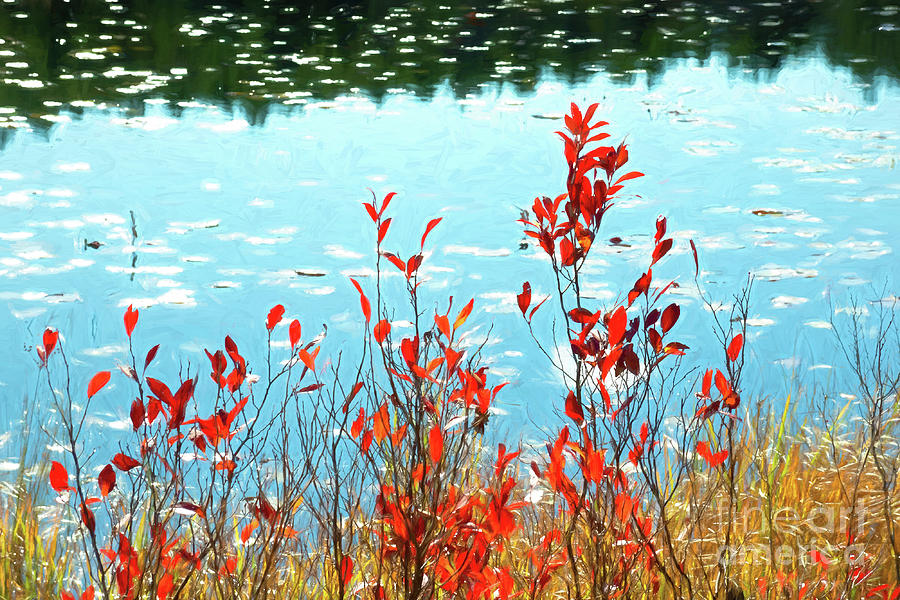 Foliage By the Water at Acadia National Park by Anita Pollak