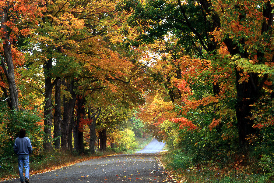 Foliage Photograph - Foliage Road by Roger Soule