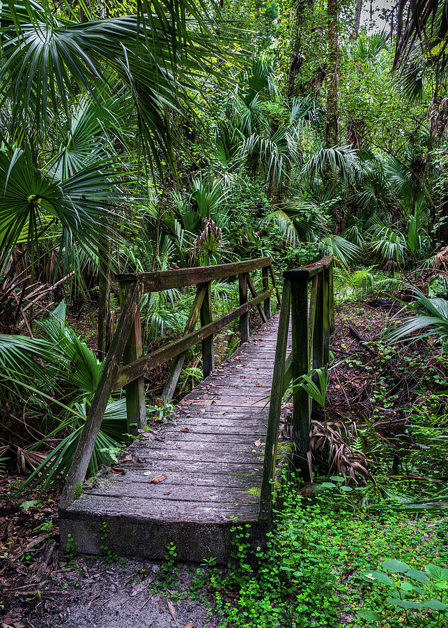 Footbridge Photograph - Footbridge in the Little Big Econ Forest by Charles LeRette