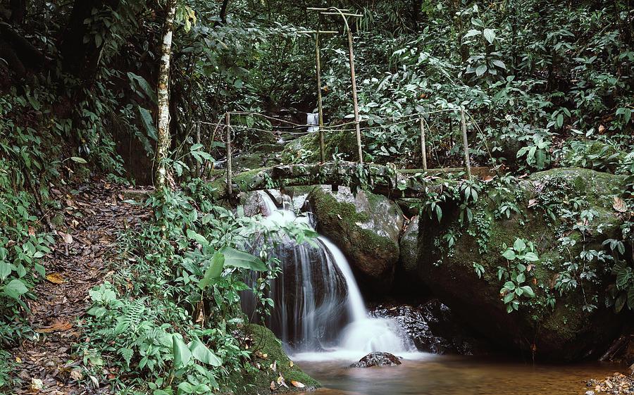 Footbridge Over A Creek In Costa Rica Photograph