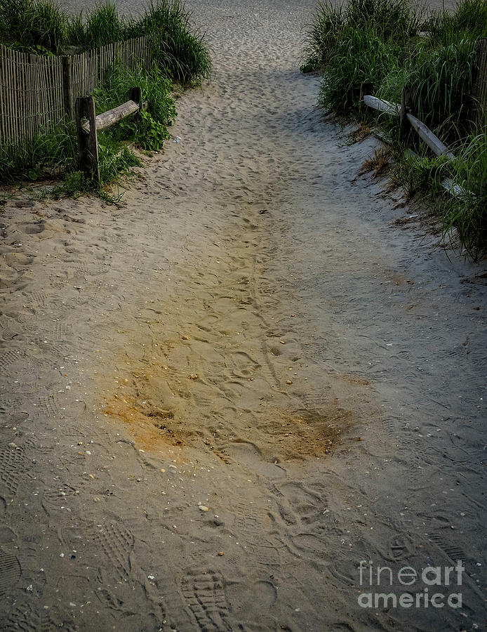 Road Photograph - Footprints in the Sand by Gina Matarazzo
