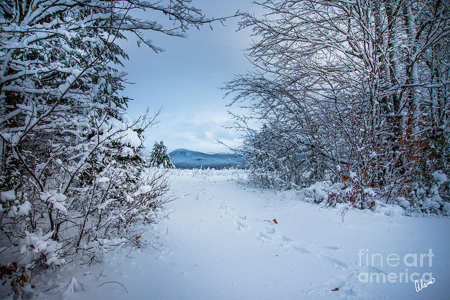 Footprints in the Snow by Alana Ranney